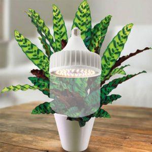 Đèn LED trồng cây rạng đông CX-T13550W WR